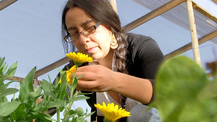 #53 Marigolds and sustainable agriculture in the Chilean desert